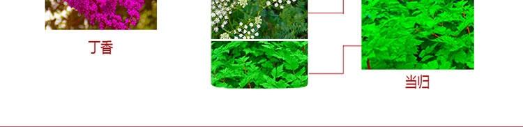 中草药植物.jpg